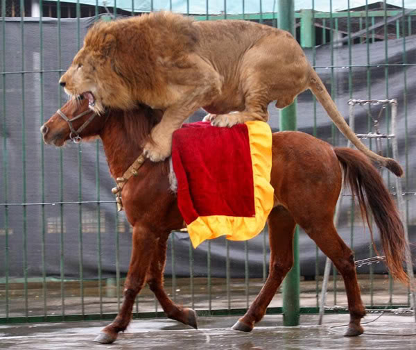 A_lion_riding_a_horse_of_course